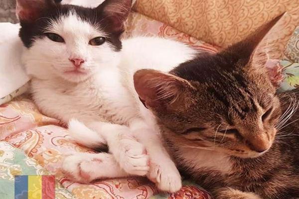 cats-43485B061B-56EF-429A-C12E-7F7764A1F477.jpg