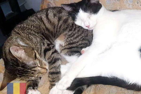 cats-51F6AE2F68-7225-5782-4380-B01DB1CD404B.jpg
