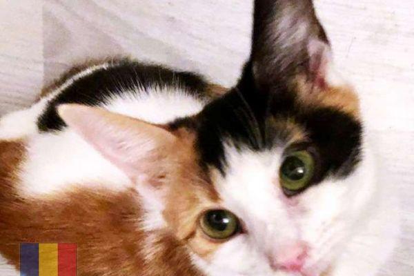 cats-1795CAA5A7-7637-B499-9247-A6E98193E342.jpg