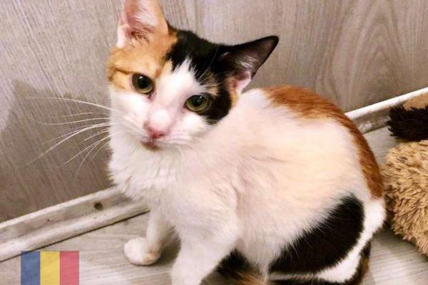 cats-43EBF45F4B-B680-F1F3-0116-A8543D9437F2.jpg