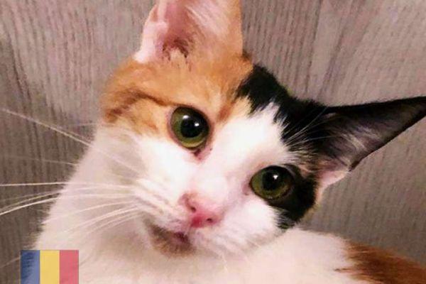 cats-463C95442-9323-88F3-6869-468268178181.jpg