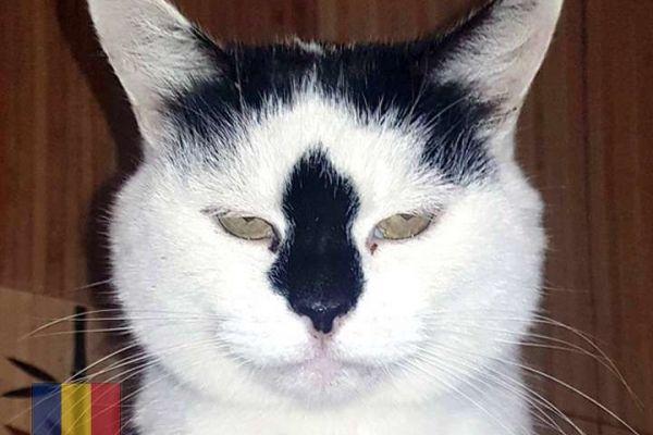 cats-3462A8DDED-361F-7709-D96E-8AAFE8378801.jpg