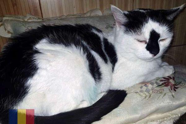 cats-583762139D-F6DF-9716-AC50-E9B5F38E1D25.jpg