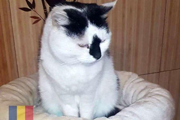 cats-984F77580-01D8-F3D2-5954-276ECC166100.jpg