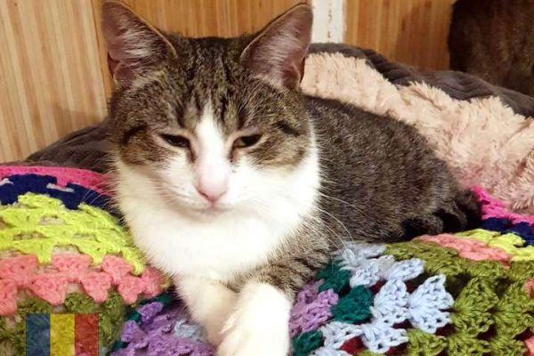 cats-65E39B19C6-A16D-9467-091D-D0E404066C29.jpg