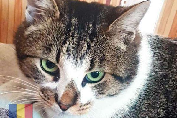 cats-59196E41C6-23F6-1416-B907-A63143FEE0E3.jpg