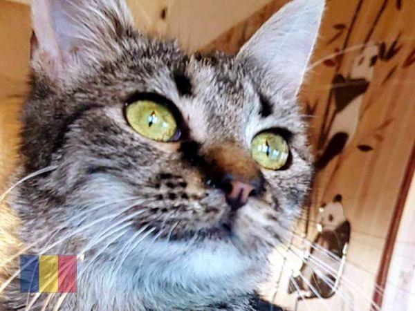 cats-49633BDD0E-895B-4FDF-BD73-A7FC2473C27E.jpg