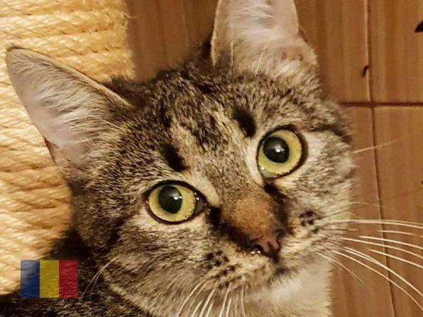 cats-57B0B97D52-6133-21FE-7CD9-A4008AA8E465.jpg