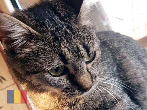 cats-6084DEDFCD-375B-7CCC-89A8-5C07D4F8425F.jpg