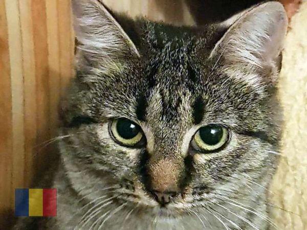 cats-614F1D7C2E-7B39-6D5F-2E15-6105CA89024D.jpg