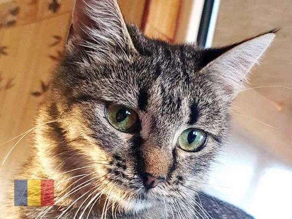cats-62B388025C-CB9B-2358-0F31-1A9E750ADE89.jpg