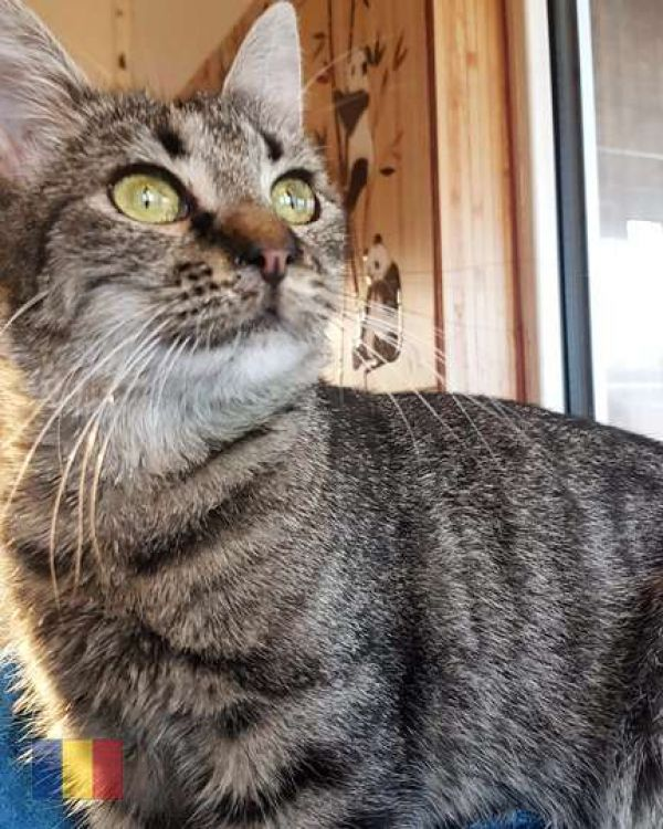 cats-7016196554-FFCE-D8BE-608E-94AE56FC2B2F.jpg