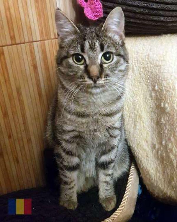 cats-77089DD11F-5B86-1F8F-37B3-94B00DDDE478.jpg