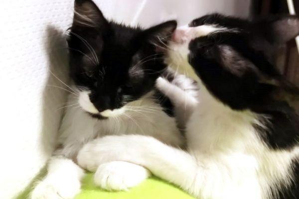 kitten-13BB15B238-4E3A-0D2B-DA5B-4B55C8739388.jpg
