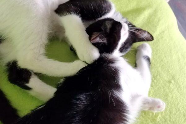 kitten-740762D01-B6BF-B700-B1D5-FFC3FB5D6906.jpg