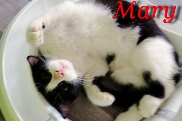 mary-103D9CDDDDB-64B8-B429-137D-1CB98C3736E6.jpg