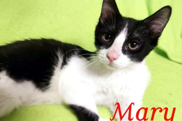 mary-112508E05BA-3FD4-C6B1-EB29-FF3F133523E9.jpg