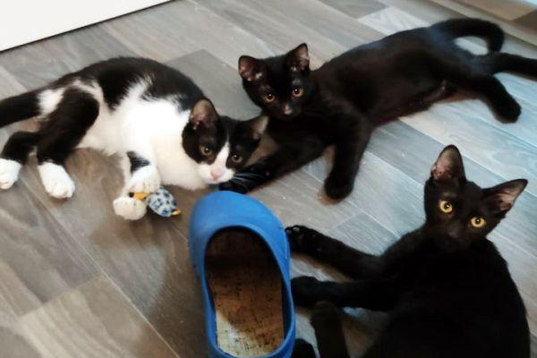 kitten-11DDFB1636-624A-AAA5-1885-31FDEDC3A769.jpg
