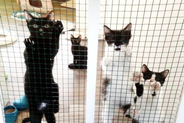 kitten-6E8D4A8FE-4245-8A11-EB05-C77150D1D56D.jpg