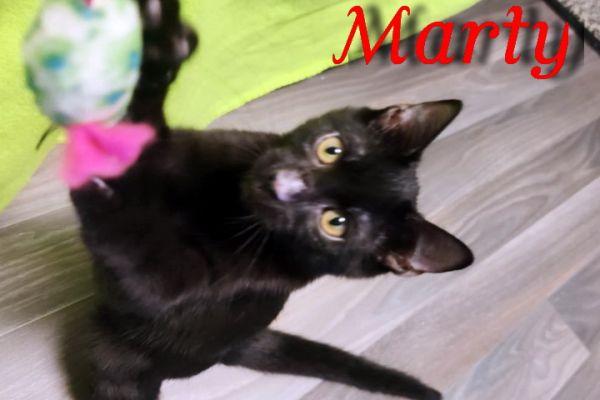 marty-10470654CA7-B5E3-91B6-7BB3-B40DDDE227A8.jpg