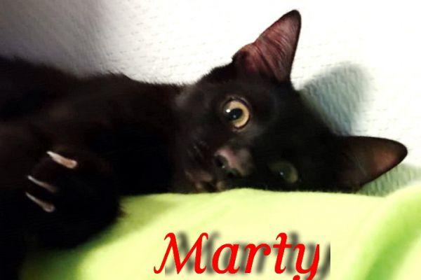 marty-109F1E36BF9-FAEE-7F4B-6107-CDC73D6EB23B.jpg