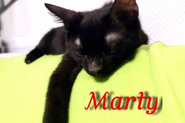 marty-115551E955C-7769-4378-C754-55D5E76B274F.jpg