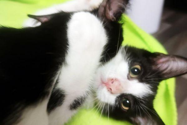 kitten-169942DE87-075C-A230-63A1-1B8A50DD956A.jpg
