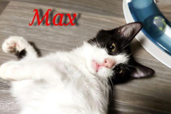 max-1098247771A-3136-1266-15DC-D23D9364F540.jpg