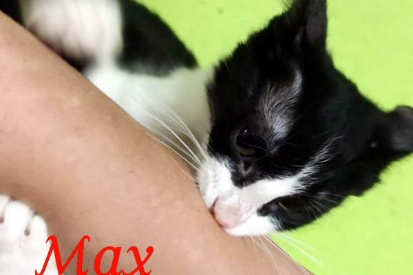 max-11009A5EAFD-BE2F-40FC-BED6-1ACAC33605AE.jpg
