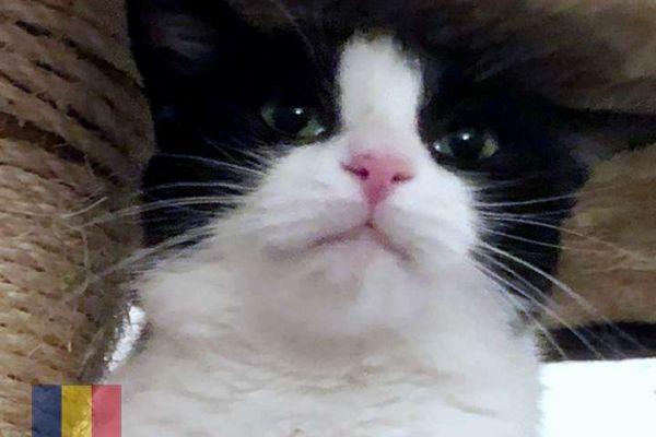 cats-12C1700BE0-516B-D93A-7383-C7EAD49EC33B.jpg