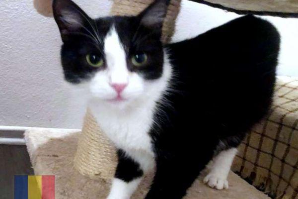 cats-13C2A327AF-C4D9-3380-BBEE-0F941F828B89.jpg
