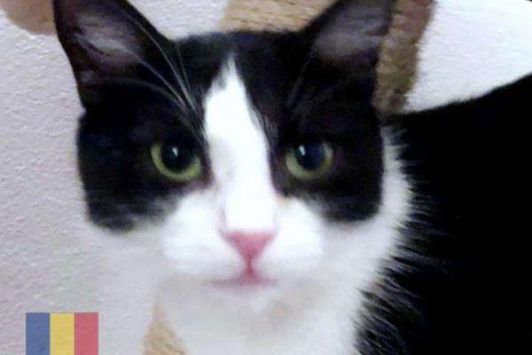 cats-149A40A29-CAD5-7C6A-12DB-5D004DA8F469.jpg