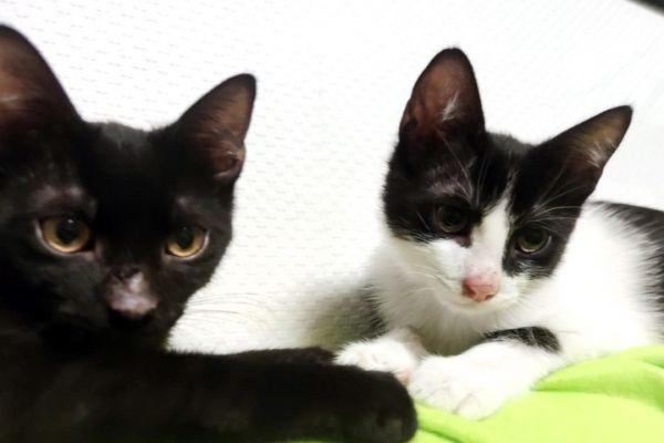 kitten-37C451F60-88D8-97A8-89C7-903ED9A991EA.jpg
