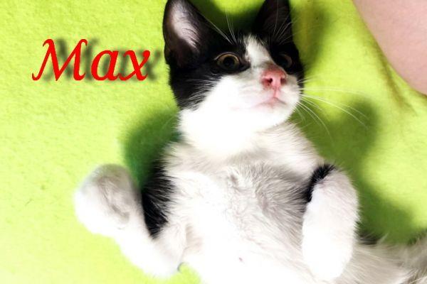 max-108F4334B93-8380-6AD5-8F24-F0FA475CF211.jpg